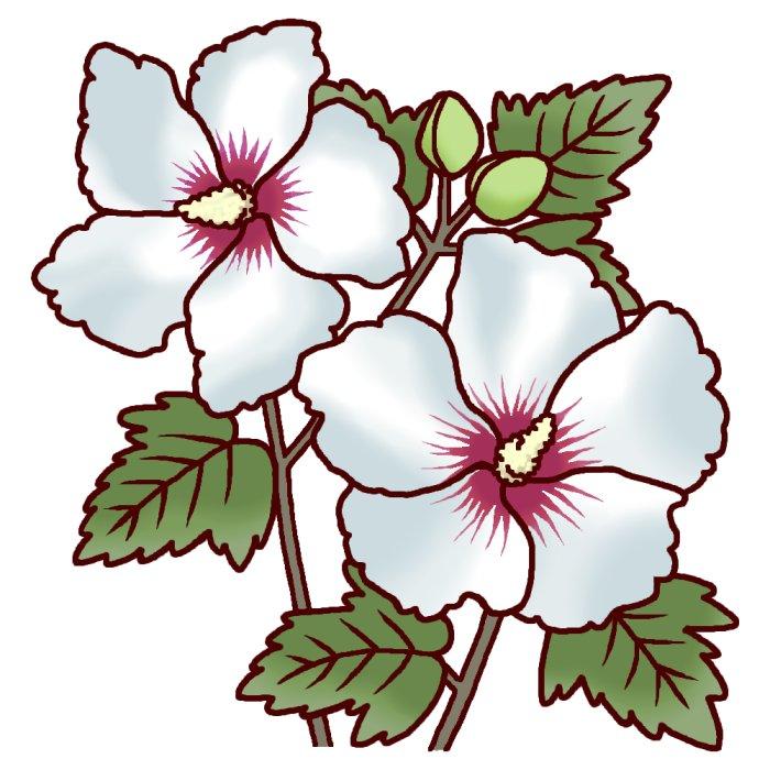むくげ 夏の花
